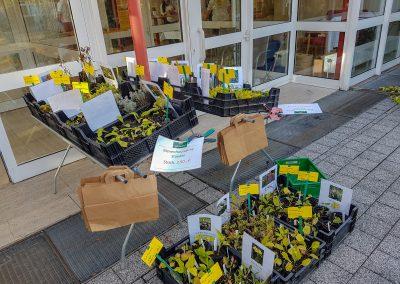 Stand mit Blütenpfalnzen vom Werkhof in Dortmund aud